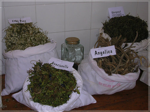Wildflowers and roots used in amaro recipes